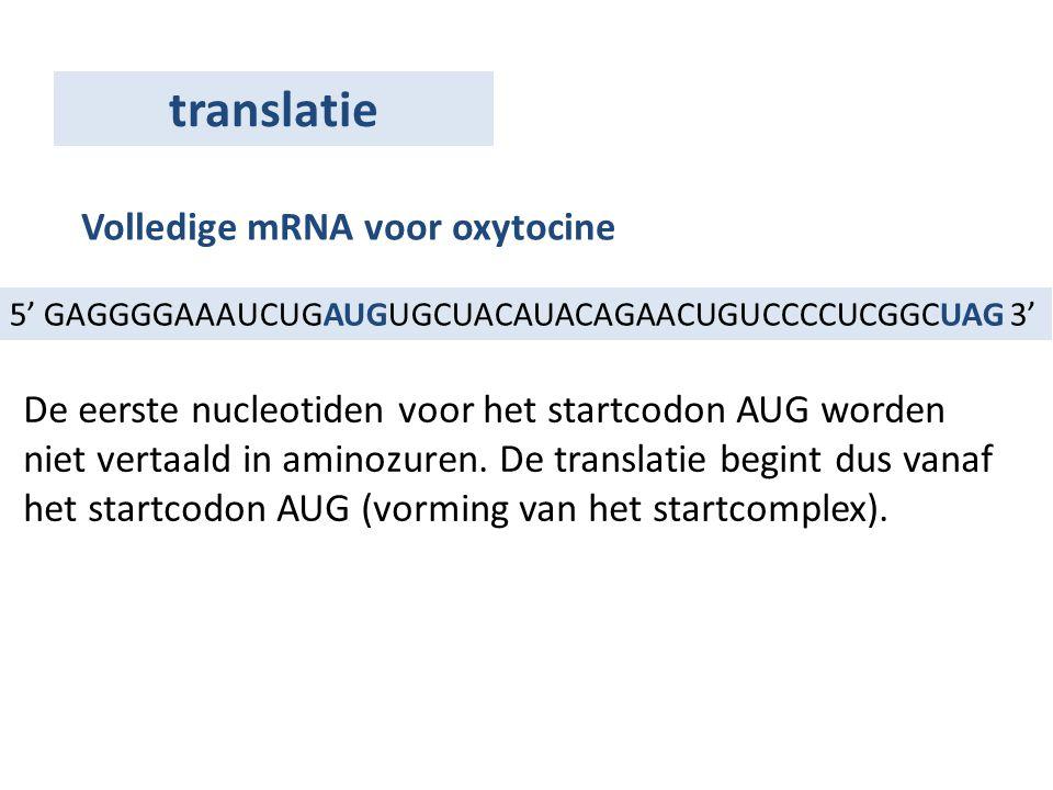 5' GAGGGGAAAUCUGAUGUGCUACAUACAGAACUGUCCCCUCGGCUAG 3' Volledige mRNA voor oxytocine De eerste nucleotiden voor het startcodon AUG worden niet vertaald