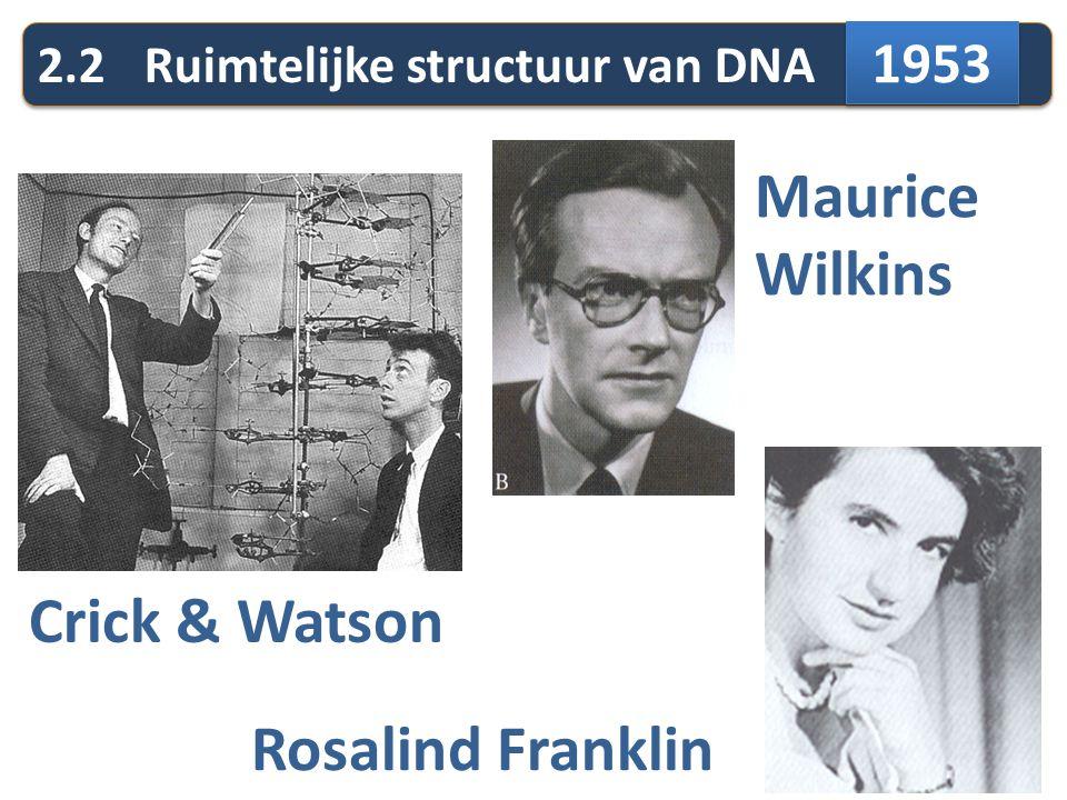 2.2Ruimtelijke structuur van DNA Crick & Watson Maurice Wilkins Rosalind Franklin 1953
