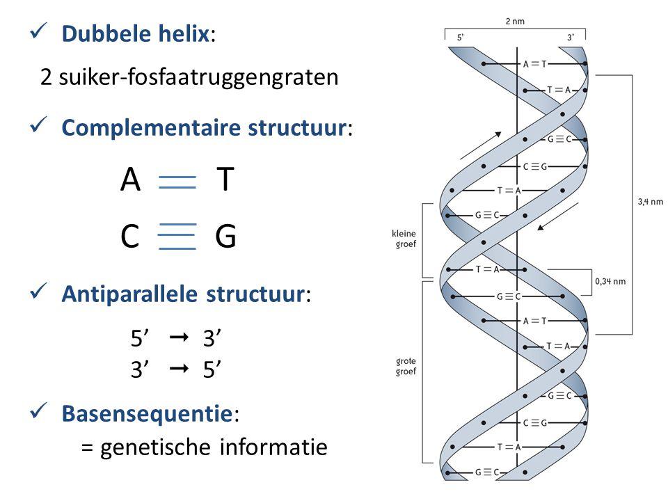 Dubbele helix: 2 suiker-fosfaatruggengraten Complementaire structuur: A T C G Antiparallele structuur: 5'  3' 3'  5' Basensequentie: = genetische in