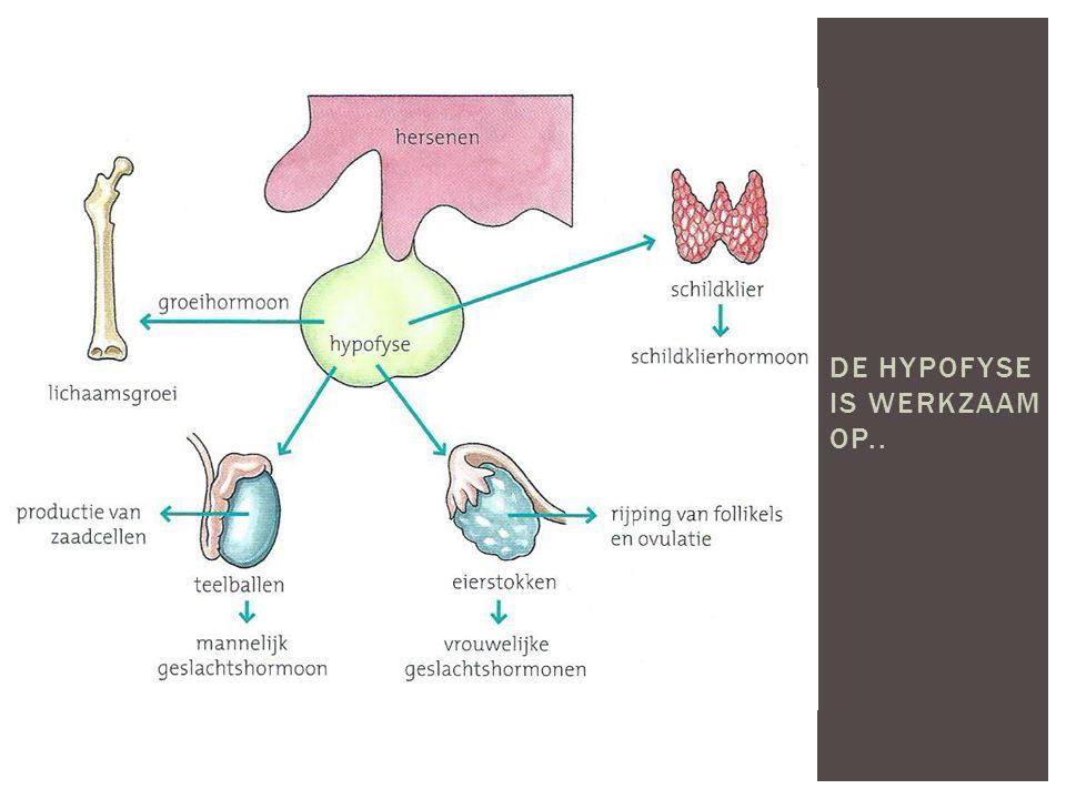  Het zenuwstelsel is opgebouwd uit zenuwen. Het zijn lichaamscellen maar heel gespecialiseerd.