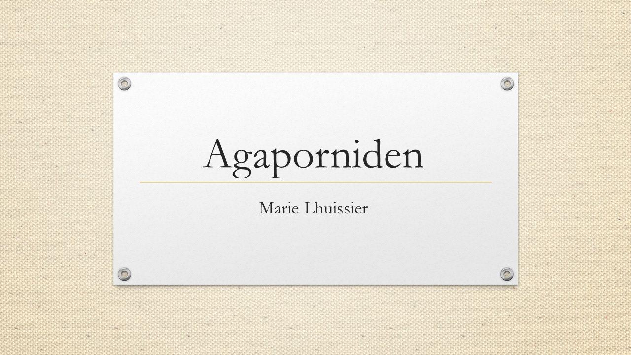 Marie Lhuissier Agaporniden