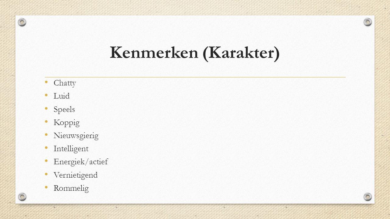 Kenmerken (Karakter) Chatty Luid Speels Koppig Nieuwsgierig Intelligent Energiek/actief Vernietigend Rommelig