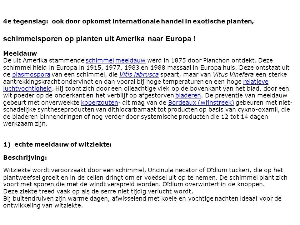 4e tegenslag: ook door opkomst internationale handel in exotische planten, schimmelsporen op planten uit Amerika naar Europa .
