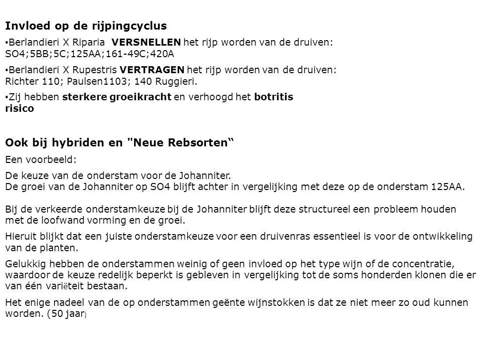 Ook bij hybriden en Neue Rebsorten Een voorbeeld: De keuze van de onderstam voor de Johanniter.
