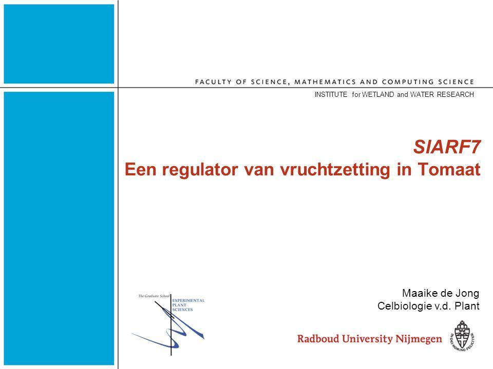 SlARF7 Een regulator van vruchtzetting in Tomaat INSTITUTE for WETLAND and WATER RESEARCH Maaike de Jong Celbiologie v.d.