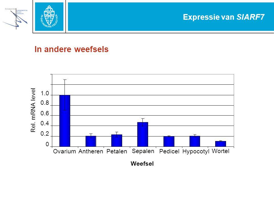 Expressie van SlARF7 In andere weefsels 0 0.2 0.4 0.6 0.8 1.0 OvariumAntherenPetalen Sepalen PedicelHypocotyl Wortel Rel. mRNA level Weefsel