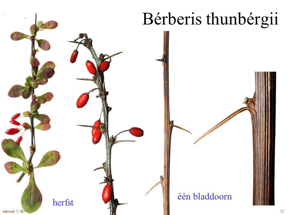 Bérberis thunbérgii één bladdoorn herfst 22inhoud: 2