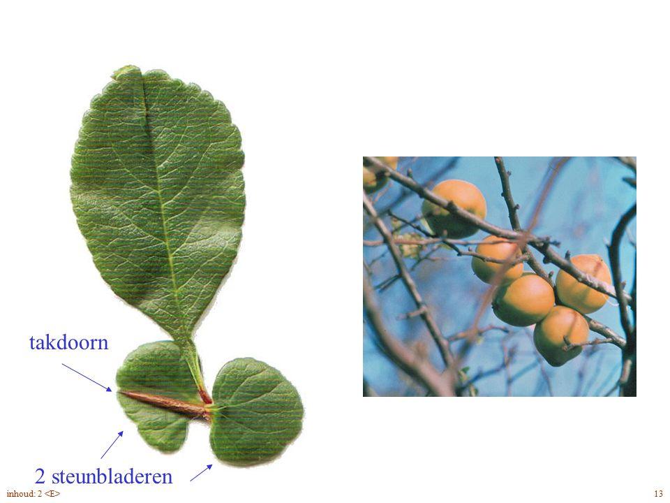 2 steunbladeren takdoorn Chaenomeles speciosa blad, bloei, vrucht 13inhoud: 2