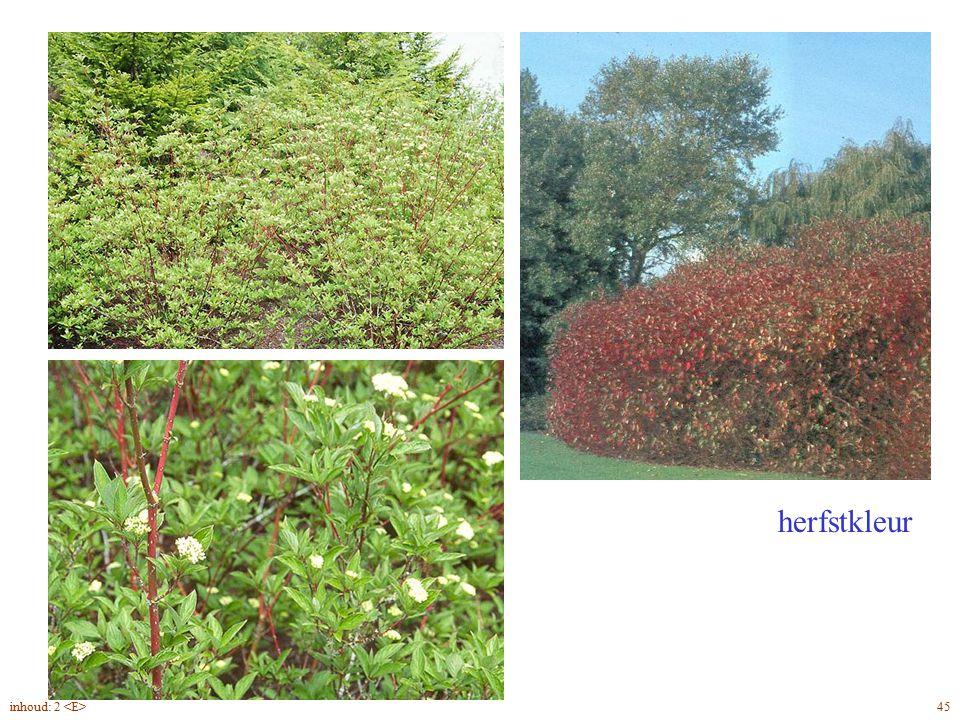 herfstkleur Cornus alba 'Sibirica' planten 45inhoud: 2