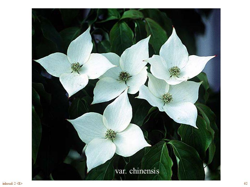 var. chinensis Cornus kousa bloei 62inhoud: 2