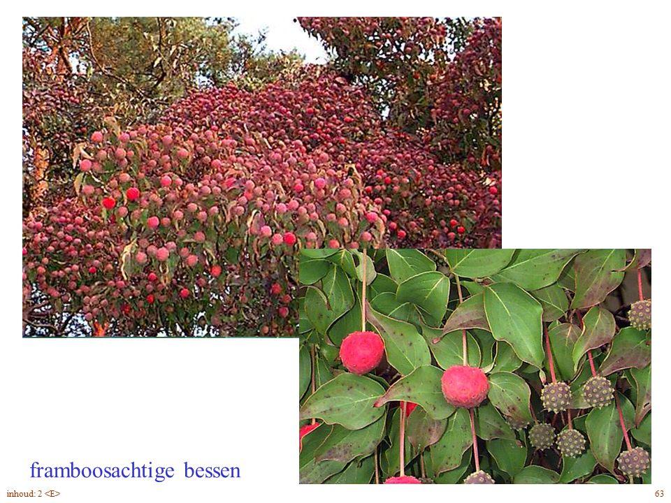 framboosachtige bessen Cornus kousa vrucht 63inhoud: 2