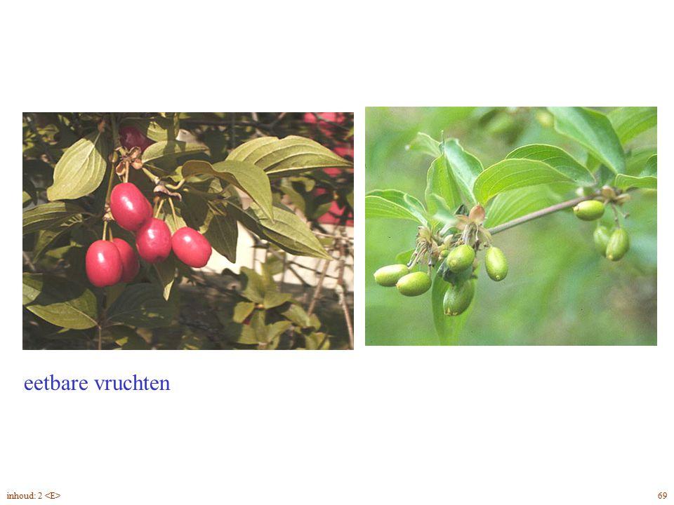 eetbare vruchten Cornus mas vrucht 69inhoud: 2