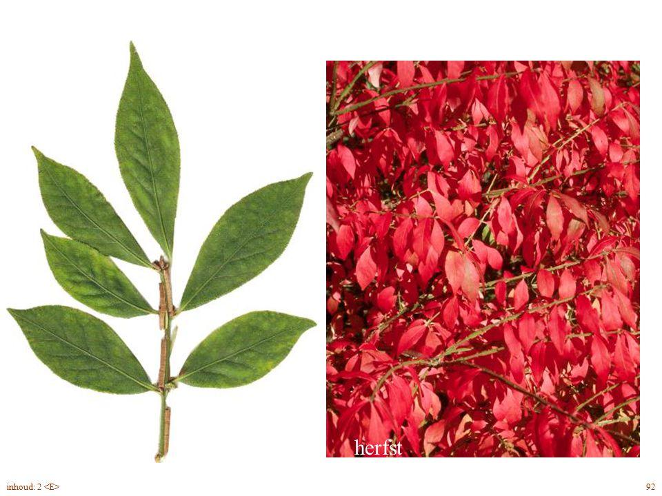 herfst Euonymus alatus blad 92inhoud: 2