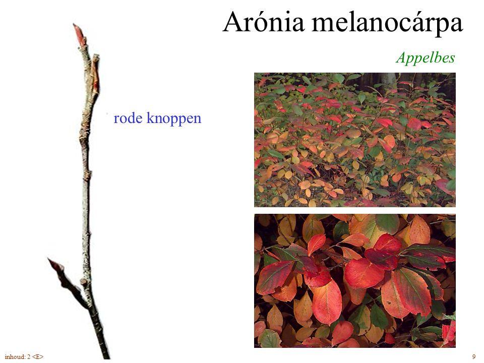 Arónia melanocárpa bloei Appelbes rode knoppen 9inhoud: 2