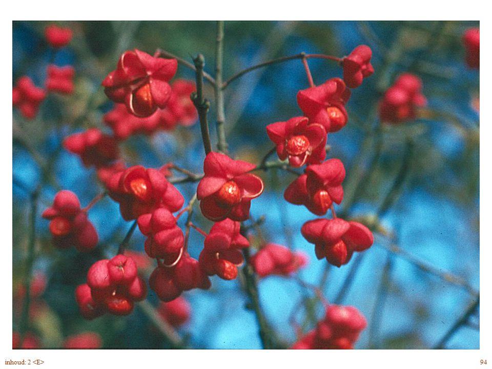 arillus Euonymus europaeus blad, bloem vrucht 94inhoud: 2 onaanzienlijke bloemen spinselmot