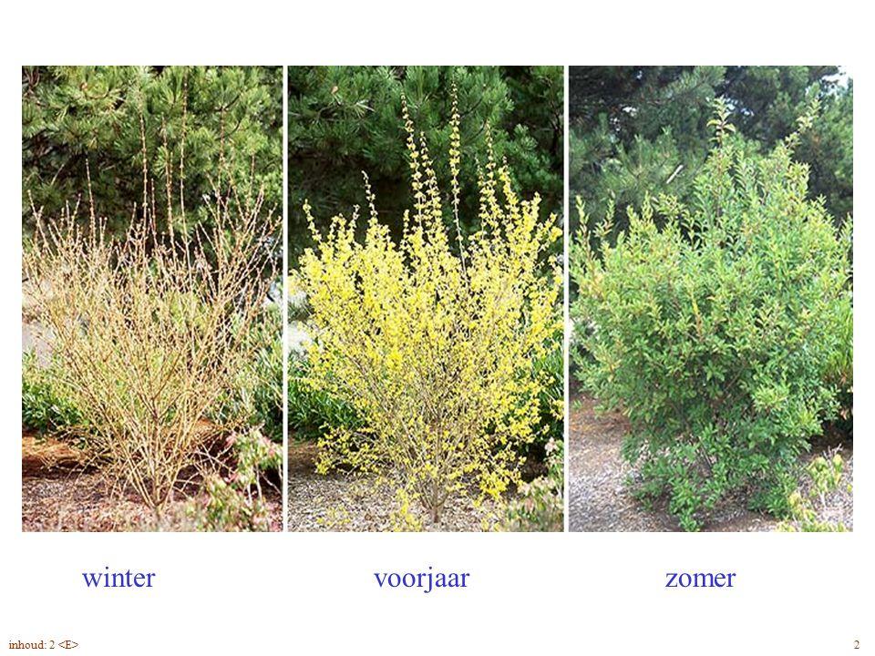 wintervoorjaarzomer Forsythia x intermedia blad, seizoenen 2inhoud: 2