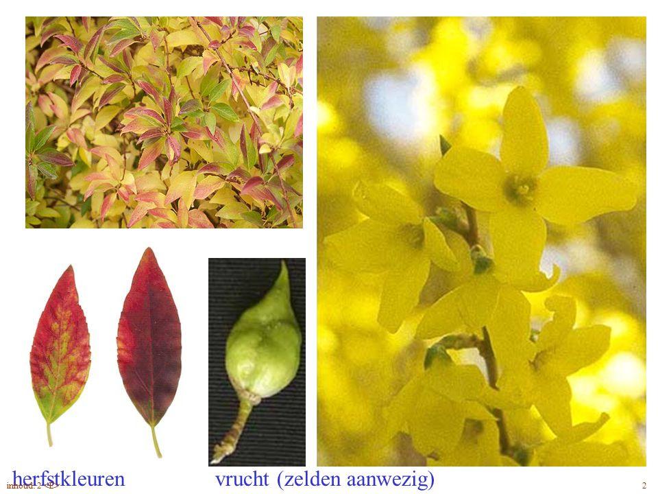 herfstkleuren vrucht (zelden aanwezig) Forsythia x intermedia blad, bloem 2inhoud: 2