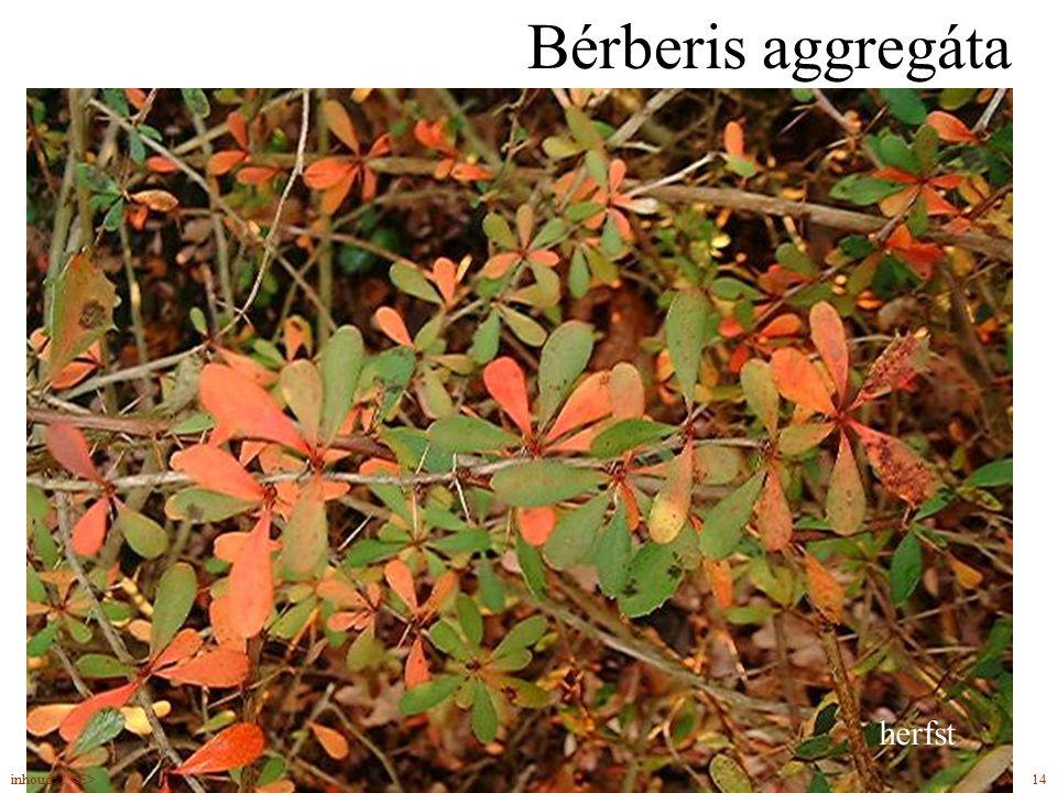 Bérberis aggregáta eetbare vruchten drie bladdoorns bladverliezend herfst 14inhoud: 2