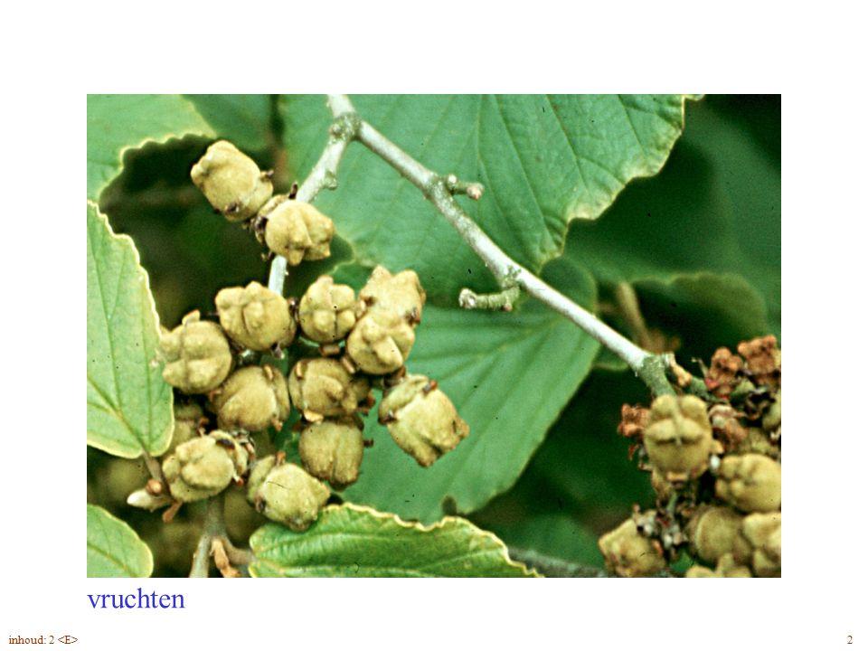 vruchten Hamamelis mollis bloei, vrucht 2inhoud: 2
