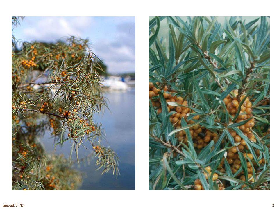 Hippophae rhamnoides vrucht 2inhoud: 2