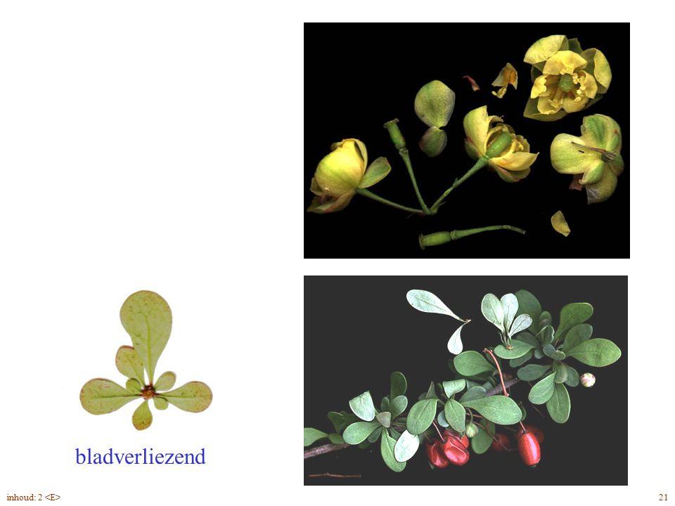 bladverliezend Bérberis thunbergii blad, bloei, vrucht 21inhoud: 2