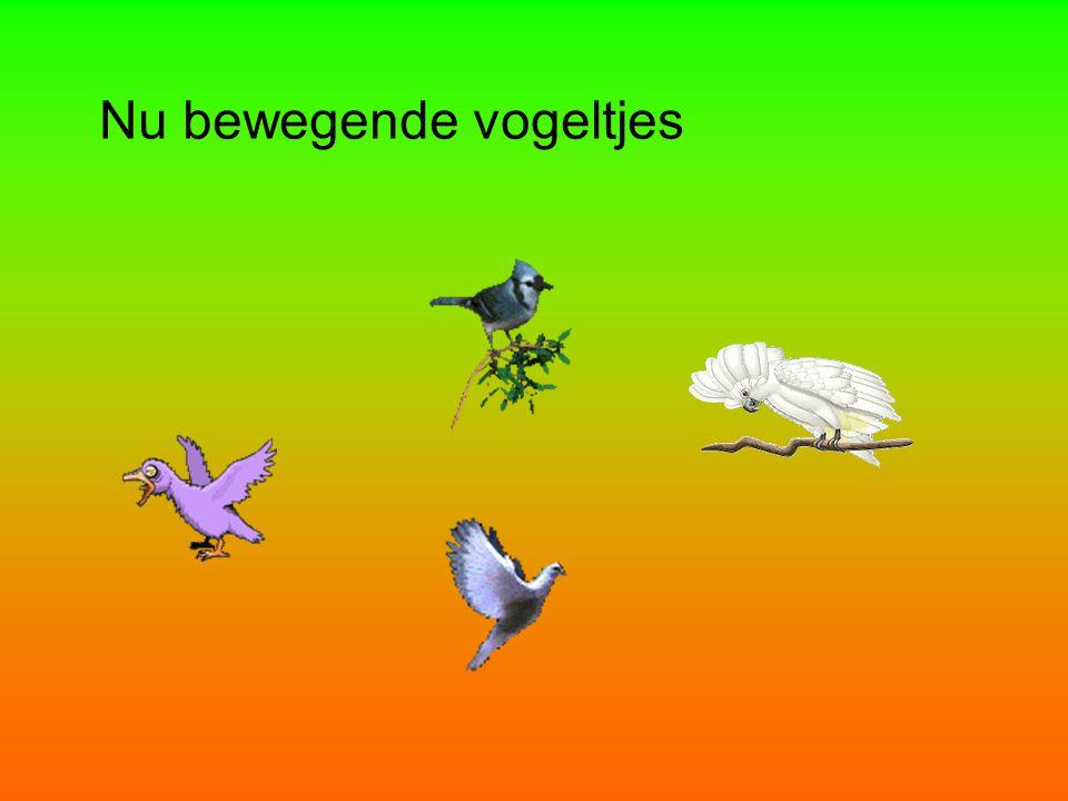 Nu bewegende vogeltjes
