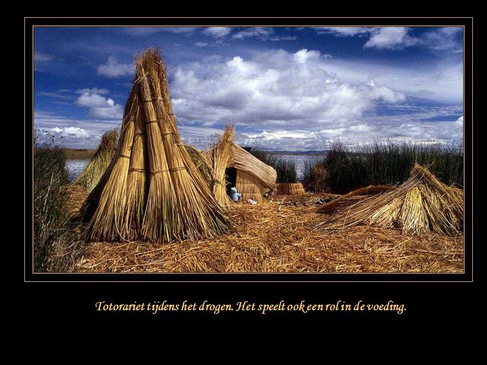 De boten voor de visvangst en de eenvoudige hutten aijn ook gebouwd met totorariet.