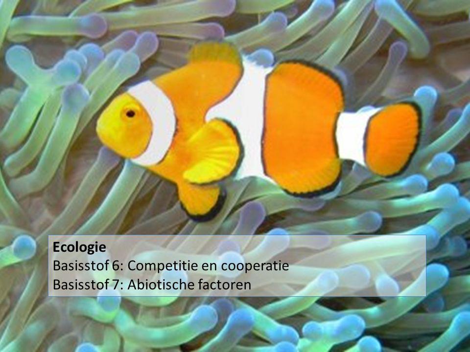 Symbiose = langdurig samenleven van individuen van verschillende soorten Ecologie Basisstof 6: Competitie en cooperatie Basisstof 7: Abiotische factoren