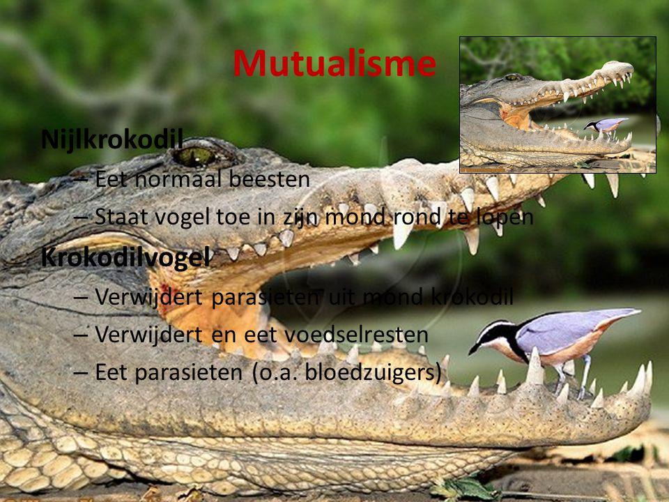 Mutualisme Nijlkrokodil – Eet normaal beesten – Staat vogel toe in zijn mond rond te lopen Krokodilvogel – Verwijdert parasieten uit mond krokodil – Verwijdert en eet voedselresten – Eet parasieten (o.a.