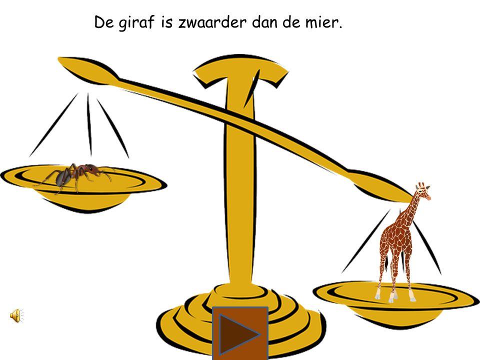 Wat is zwaarder, de mier of de giraf?
