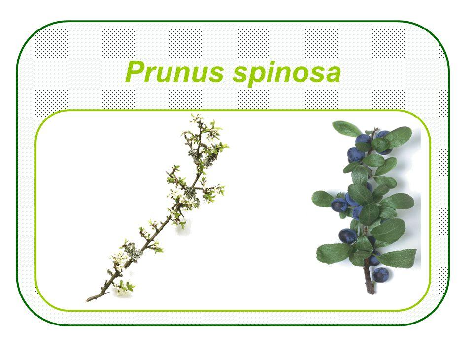 Maart Nomenclatuur Plant
