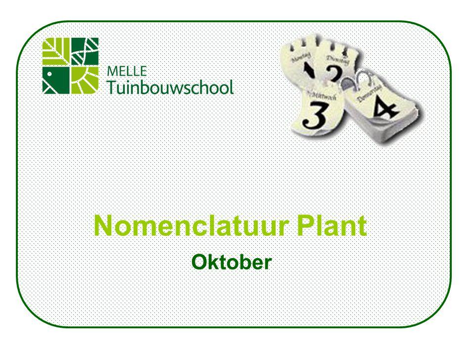 Oktober Nomenclatuur Plant