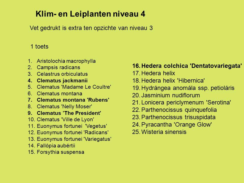 1.Aristolochia macrophylla 2.Campsis radicans 3.Celastrus orbiculatus 4.Clematus jackmanii 5.Clematus 'Madame Le Coultre' 6.Clematus montana 7.Clematu
