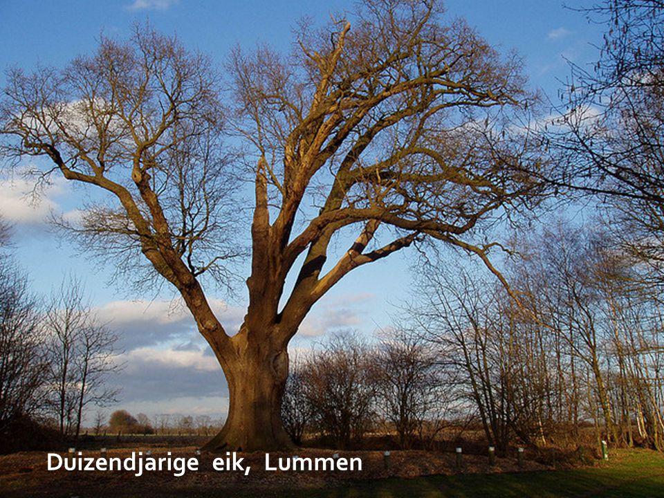 Belgisch Militaire Begraafplaats, Leopoldsburg