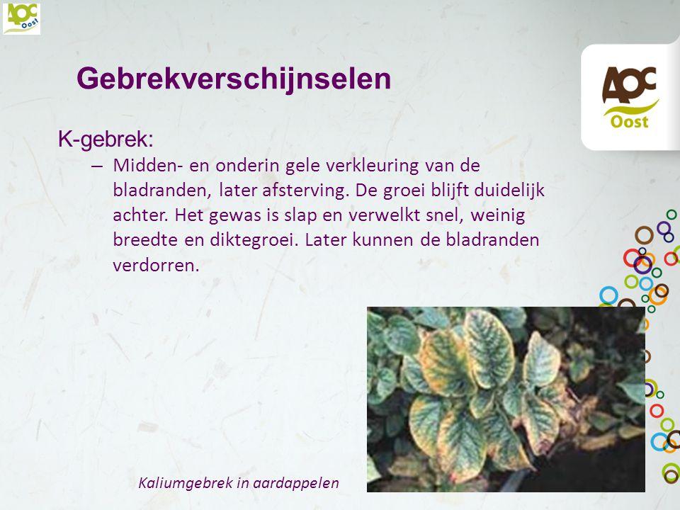 Gebrekverschijnselen P-gebrek: – slecht ontwikkelde wortels, later bloei, klein blad en paarsverkleuring langs de bladranden. Op ijzerhoudende gronden