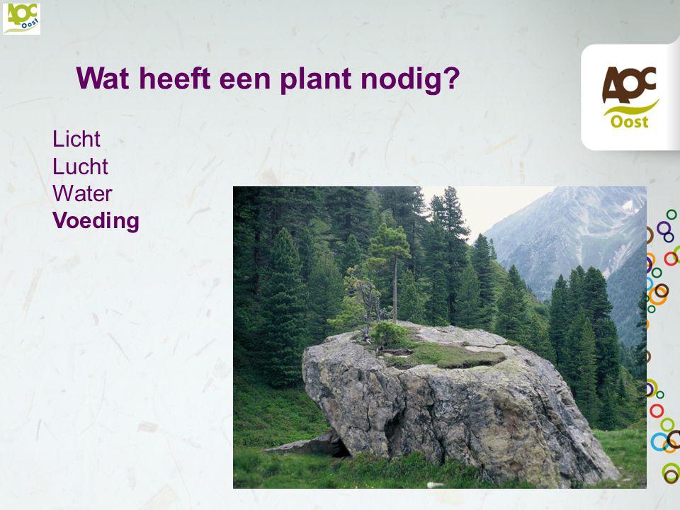 Wat heeft een plant nodig? Licht Lucht Water Voeding