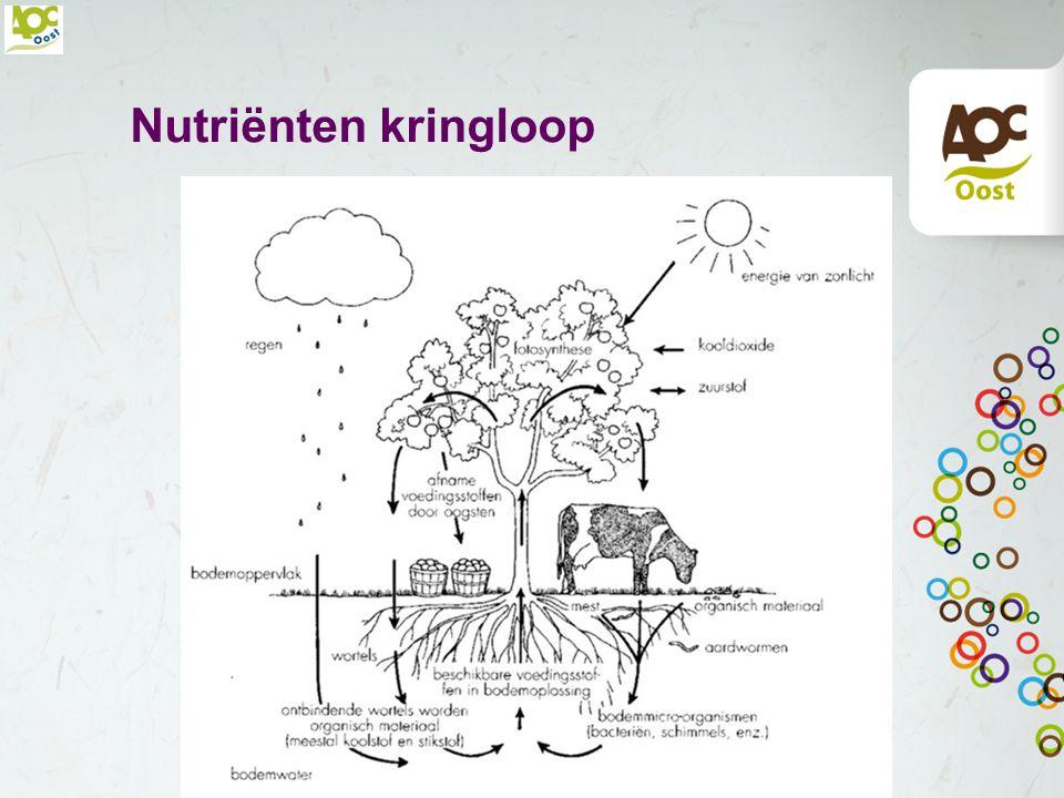 Hoofdelementen N = Stikstof – Voor bovengrondse plantendelen, bladgroen.