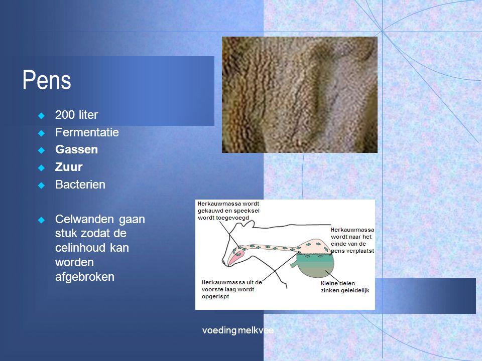 Pens  200 liter  Fermentatie  Gassen  Zuur  Bacterien  Celwanden gaan stuk zodat de celinhoud kan worden afgebroken