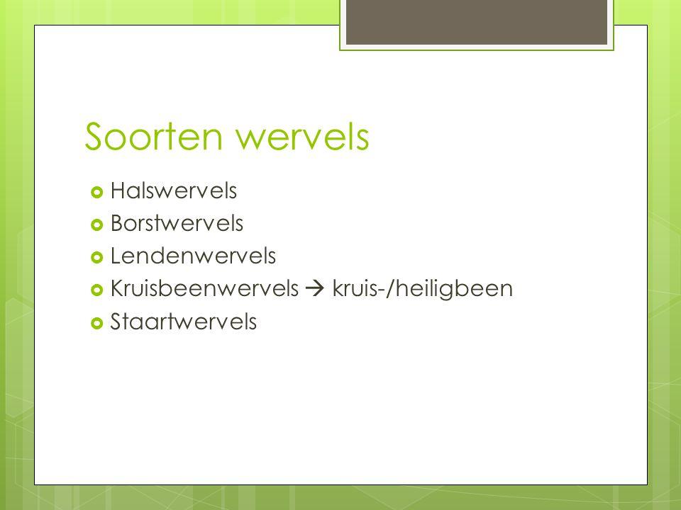 Soorten wervels  Halswervels  Borstwervels  Lendenwervels  Kruisbeenwervels  kruis-/heiligbeen  Staartwervels