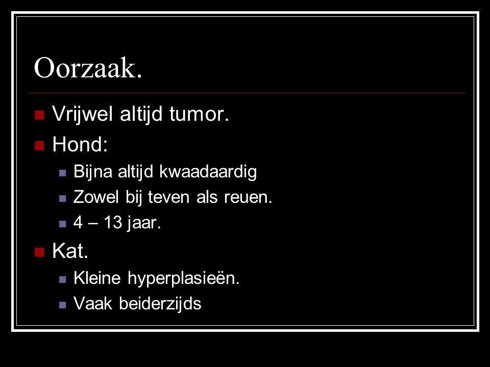 Oorzaak. Vrijwel altijd tumor. Hond: Bijna altijd kwaadaardig Zowel bij teven als reuen. 4 – 13 jaar. Kat. Kleine hyperplasieën. Vaak beiderzijds