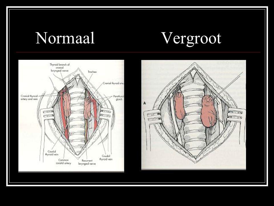 Normaal Vergroot