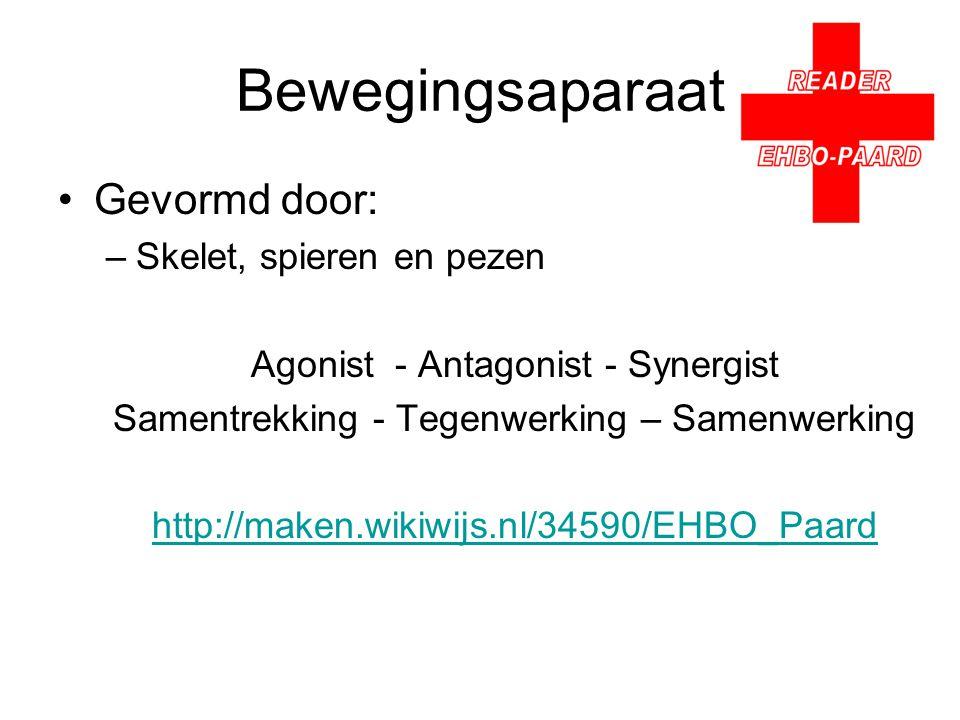 Bewegingsaparaat Gevormd door: –Skelet, spieren en pezen Agonist- Antagonist - Synergist Samentrekking - Tegenwerking – Samenwerking http://maken.wikiwijs.nl/34590/EHBO_Paard