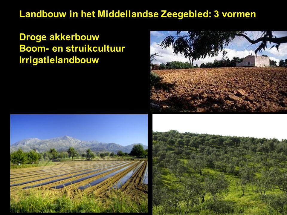 Landbouw in het Middellandse Zeegebied: 3 vormen Droge akkerbouw Boom- en struikcultuur Irrigatielandbouw