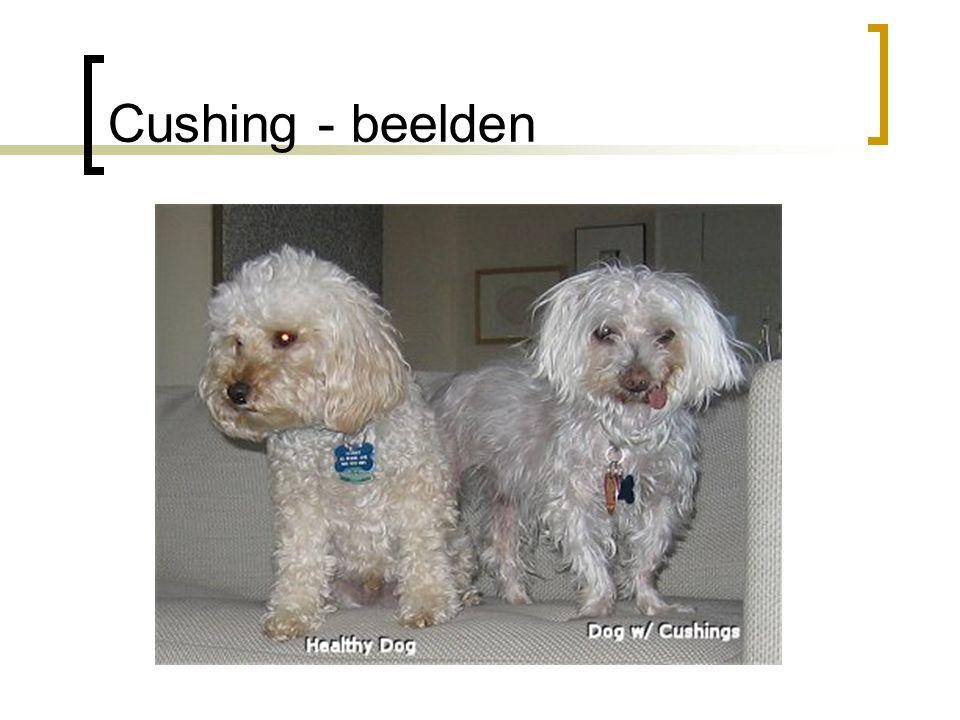 Cushing - beelden