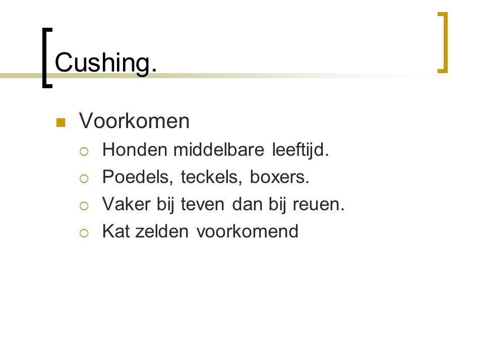 Cushing: symptomen  Polyurie / polydipsie  Polyfagie  Dorre dunne vacht met kaalheid  Dunne huid / kalkafzetting in huid  Soms pigmentatie (donkere vlekken)  Verminderd uithoudingsvermogen  Dikke buik  Spierzwakte / spieratrofie