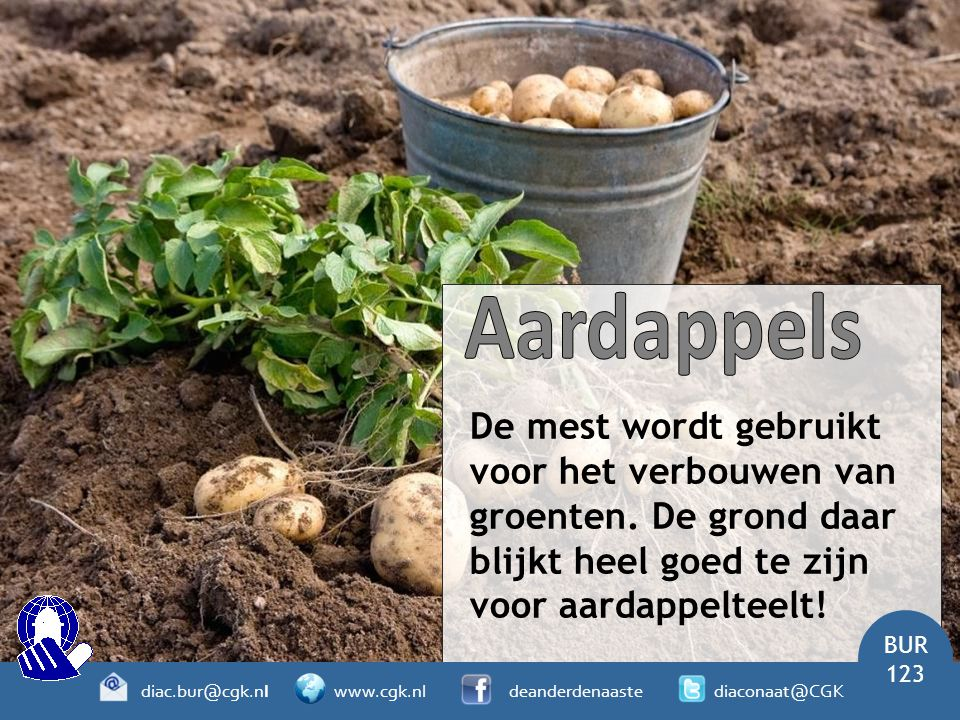 De mest wordt gebruikt voor het verbouwen van groenten. De grond daar blijkt heel goed te zijn voor aardappelteelt! BUR 123 diac.bur@cgk.nl www.cgk.nl