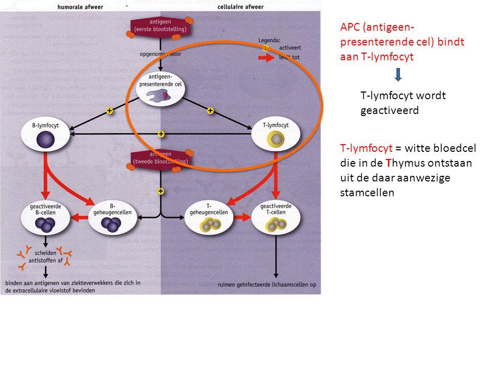 T-lymfocyt = witte bloedcel die in de Thymus ontstaan uit de daar aanwezige stamcellen APC (antigeen- presenterende cel) bindt aan T-lymfocyt T-lymfocyt wordt geactiveerd