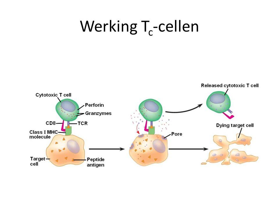 Werking T c -cellen