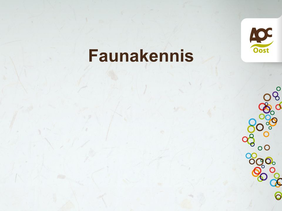 Faunakennis