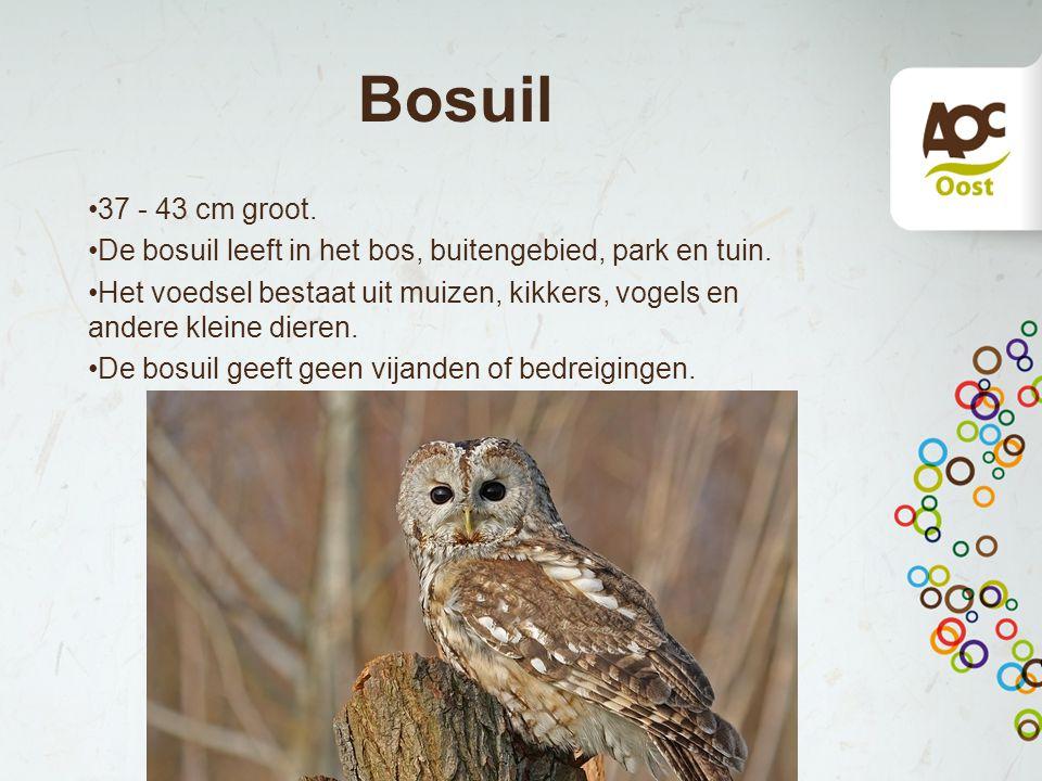 Bosuil 37 - 43 cm groot. De bosuil leeft in het bos, buitengebied, park en tuin. Het voedsel bestaat uit muizen, kikkers, vogels en andere kleine dier